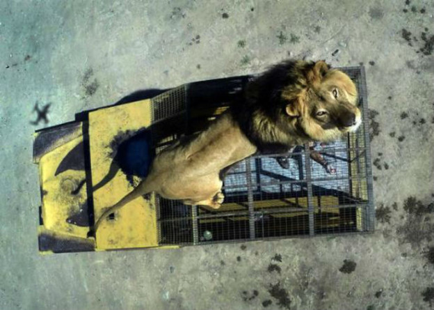 lionzoo